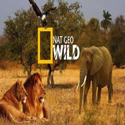 Yırtıcının Gözünden (National Geographic)
